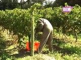 CFPPA Pyrénées Roussillon de Rivesaltes (66)