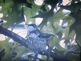 HUMMINGBIRD DON'T FLY AWAY FLY AWAY