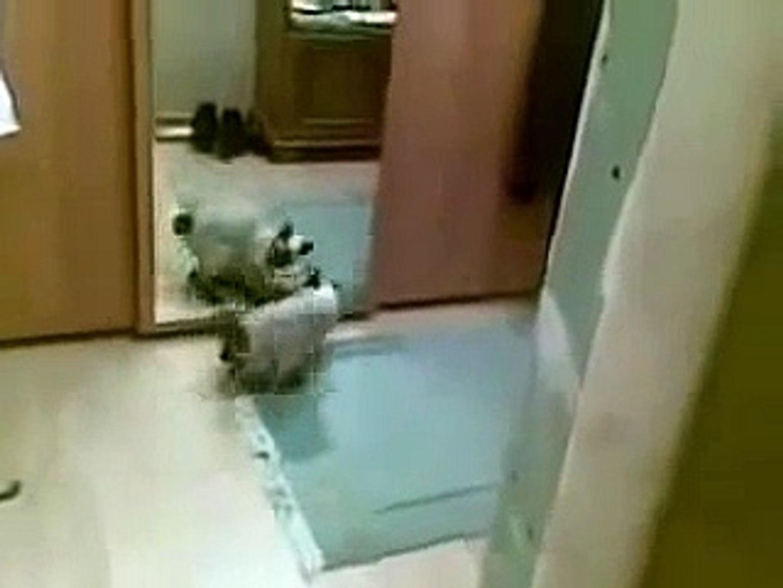TOP Funny Cats Videos 2015,funny fail Cats Compilation,Funniest Cats, Cute Cat crazy, New Funny Cats