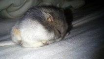 Jerrie - Dans le lit de sa Môman