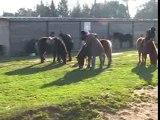 Lucy au centre equestre