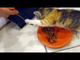 Un chaton ne veut pas partager sa nourriture