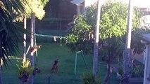 Thats One Happy Swinging Dog