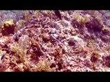 Scuba Diving In Cancun - Cazones Reef