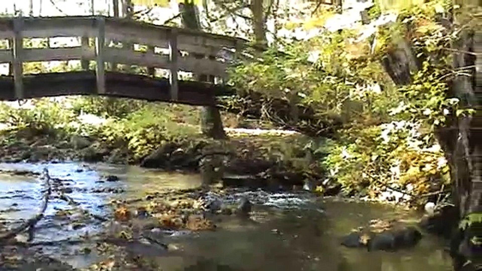 Bobby Goldsboro - Blue Autumn