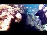 Scuba Diving In Cancun - Rodman Reef