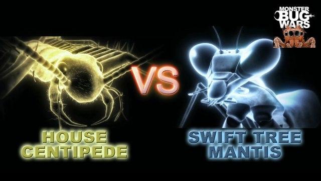 MONSTER BUG WARS | House Centipede Vs. Swift Tree Mantis