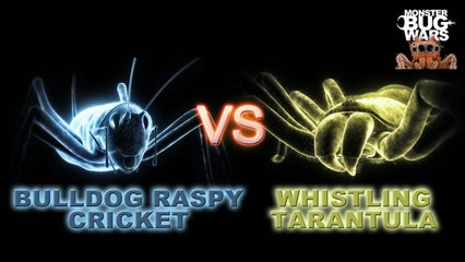 MONSTER BUG WARS | Bulldog Raspy Cricket Vs Whistling Tarantula