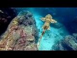 Tiburon, en las garras del hombre (Sharkwater) español  (1/9)