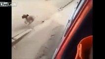 ce chien est fidèle à son maitre court aussi vite que l'ambulance qui transporte son maitre a l'hopital