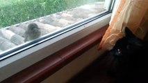 Un chat essaie d'effrayer un oiseau : raté!