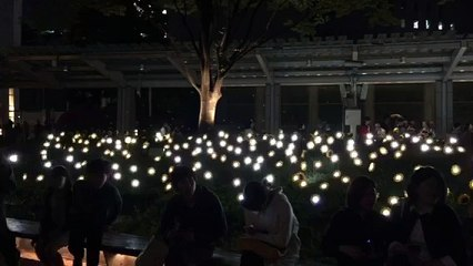 Little Sun Garden at Roppongi Art Night 2015