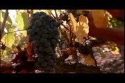 Video corporativo Viña Concha y Toro   Corporate video of Concha y Toro winery