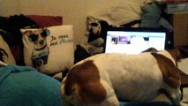coussin jack vs vrai jack russell