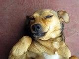 Perro que se Rie Chile ademas bonus track el Perro Chupacabras