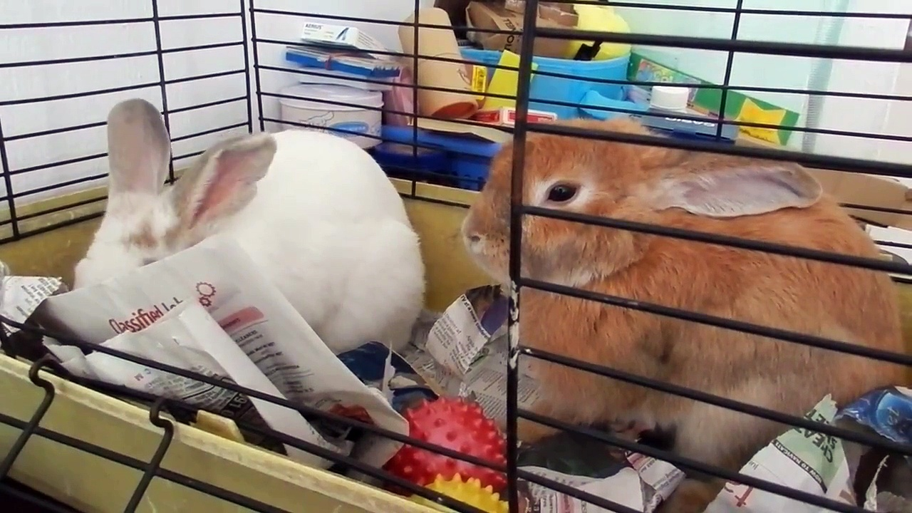 Rabbit wakes up another rabbit