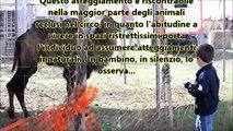Gli animali nei circhi italiani - Ottobre 2012 - riprese dall'inferno | TerrAnomala