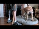 Canine Companions Wounded Veterans Initiative