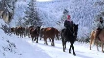 Transhumance chevaux pieds nus Pyrenees Free HORSES barefoot