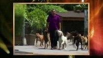 el encantador de perros -Labradores de Famosa(4ªTemp)(1de2)