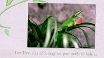 green anole food   green anole   green anole lizard   green anole care sheet   green anole facts