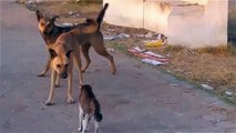 Funny animals cats and dogs - cool cat - Cat wins two Dogs - cats and dogs funny videos