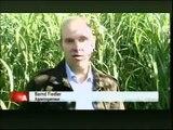 Miscanthus nachwachsende Rohstoffe Bericht WDR Oktober 2009