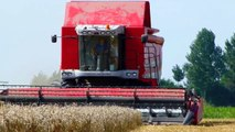 Massey Ferguson Centora 7280 - Wintertarwe dorsen / Cutting wheat