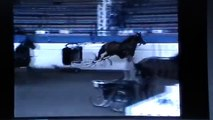 Horse Pulling Cart Sport - A small problem made disastrous by Stupid Humans- Rick Gore Horsemanship