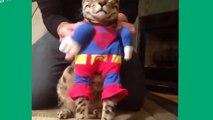 funny cats compilation fail,funny talking cats compilation,funny cats compilation 2015