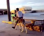 funny clip on petrol in Arab  #WhatsUp #57