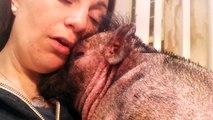 Elle chante pour réconforter son petit cochon!