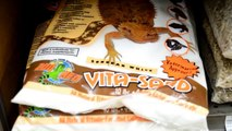 Leopard Gecko Care Tutorial; How to Take Care of your Leopard Gecko! : Citrus Reptiles