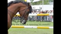 What bits do to horses when you pull on their mouth