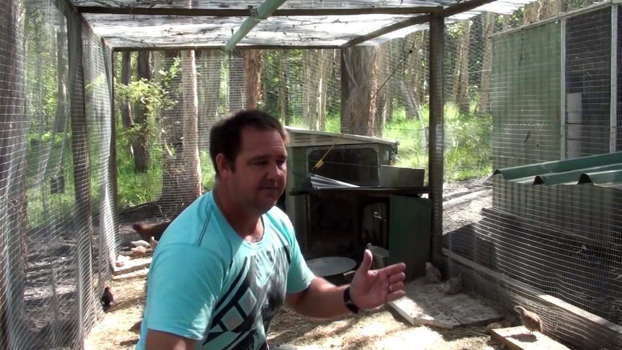 Quail/chicken run build lessons learnt.mp4