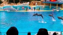 Spectacle dauphins Marineland -30/03/2013