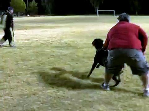Rottweiler Attack