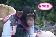 Maymun ve Köpeği , Sorunlar ve Çözümleri
