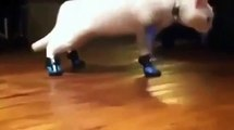 New Animal Funny Videos _ Cats With Boots Are Broken Funny Videos?syndication=228326