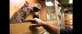Prehistoric Pets: The Reptile Zoo- The Tonight Show with Conan O'Brien Ep.10