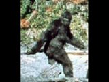 BIGFOOT: A closer look at the Patterson/Gimlin footage.