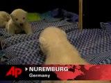 Raw Video: Polar Bear Sees Double