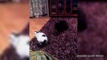 Les chiens n'aiment pas les bagarres... de chats