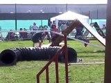 Border collie agility 2005