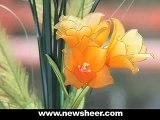 DIY How to Make Nylon Tulips - Nylon flower tutorial  (Stocking flower Tulip)
