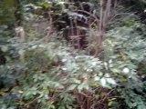 les beagle harriers de la chaume à tous vents en pleine menée