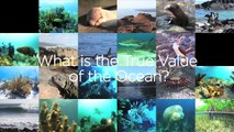 Two Minutes on Oceans w/ Jim Toomey: The True Value of Our Oceans