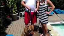 Pit Bull Won't Swim in Pool - DOG INTERVENTION Dog Whispering BIG CHUCK MCBRIDE