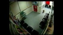 Un koala déambule aux urgences d'un hôpital en Australie