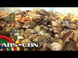 Pateros targets 'balut' world record